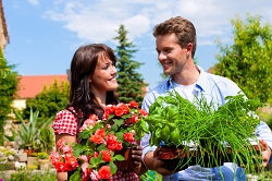 Profitable Garden Maintenance Service in Roehampton